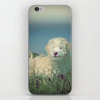 puppy iPhone & iPod Skins featuring PUPPY  by Monika Strigel
