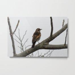 animal wood bird wild birds fields Metal Print