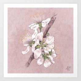 Botanical Study Art Print