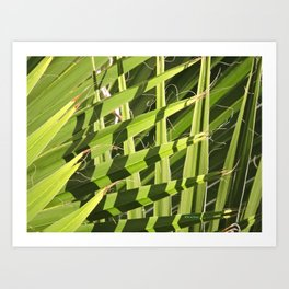 TEXTURES -- Palm Fronds Intersecting Art Print