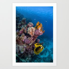 Butterfly fish couple Art Print