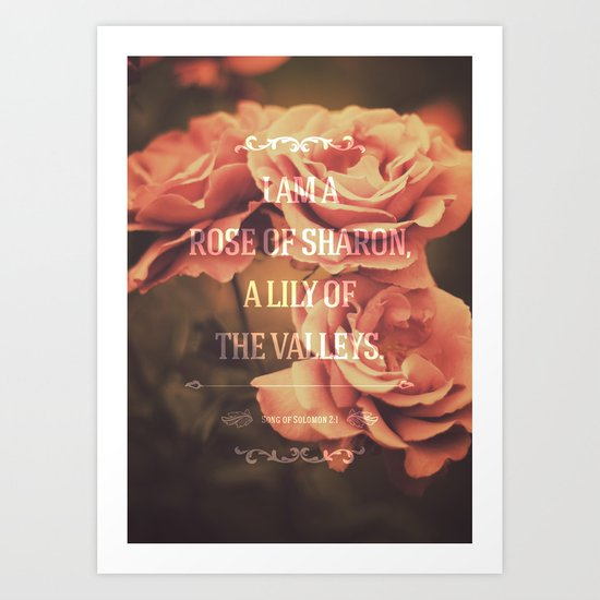 I am a rose of Sharon, a lily of the valleys. - Song of Solomon 2:1