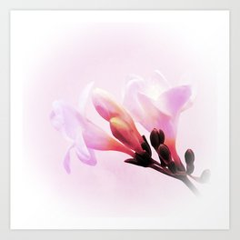 Pink freesia Art Print