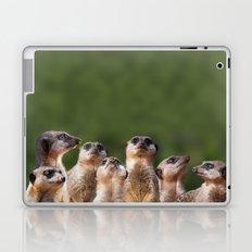 Meerkat Mob Laptop & iPad Skin