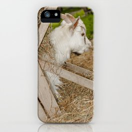 Little billy goat iPhone Case