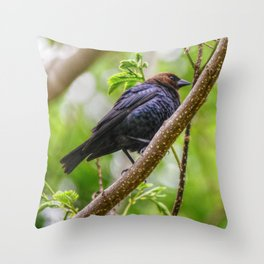 Brown Headed Cowbird Throw Pillow