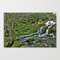 Natural Stream Canvas Print