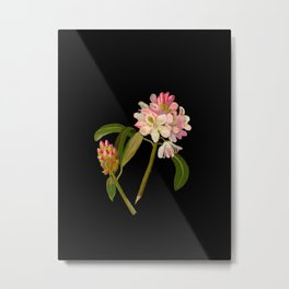 Rhododendron Maximum Mary Delany Delicate Paper Flower Collage Black Background Floral Botanical Metal Print