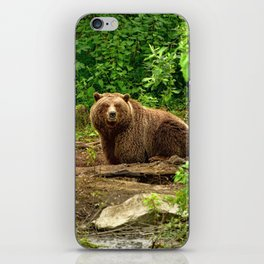 Awe Inspiring Giant Adult Grizzly Bear Observing Photographer In Green Pasture Ultra HD iPhone Skin