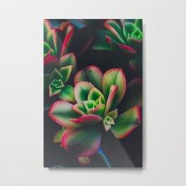 The Succulent Garden 3 Metal Print