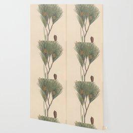 Botanical Pine Wallpaper