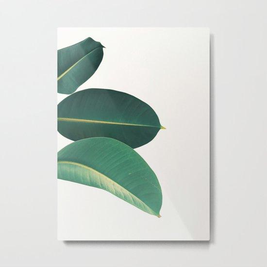 Rubber Fig Leaves II Metal Print