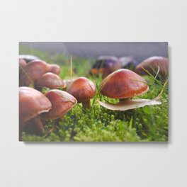 Macro Fungi - Nature Photography Metal Print