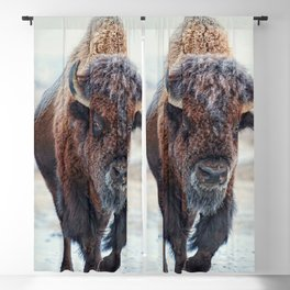 American Bison Blackout Curtain