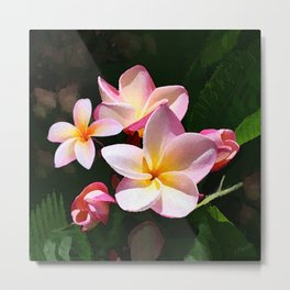 Love's First Blush Hawaiian Plumeria Metal Print