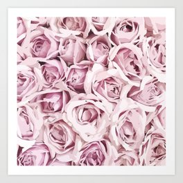 Blush Roses Kunstdrucke