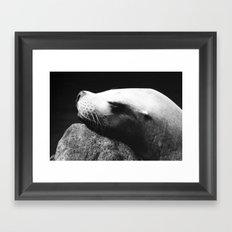 Seal 1 Framed Art Print