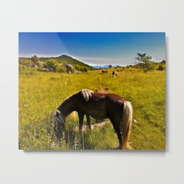 Wild Ponies of Grayson Highlands Metal Print