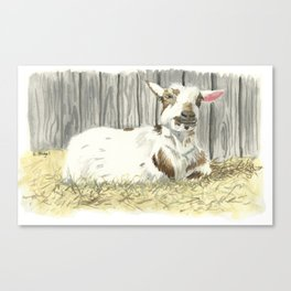 Goat in the Sunshine - Watercolor Canvas Print