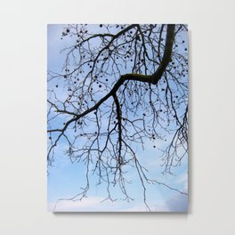 View of the sky 1 Metal Print