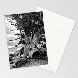 Wally Waldron Tree - Mt. Baden Powell Stationery Cards