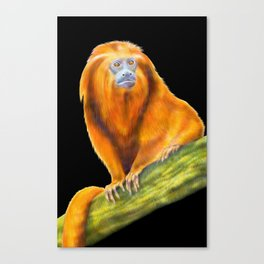 Golden Lion Tamarin Canvas Print