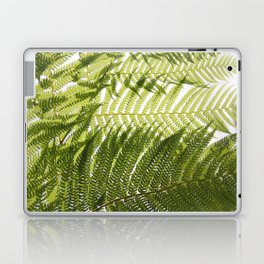House Plant Fern Leaf Silhouette Sunlight Zen Photo Laptop & iPad Skin