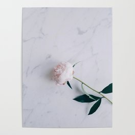 Blush Pink Peony on Marble Surface Poster