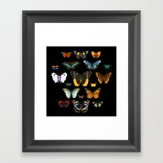 Entomology (Black) Framed Art Print