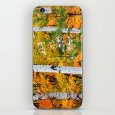 Birch Trees and Autumn Colors iPhone & iPod Skin