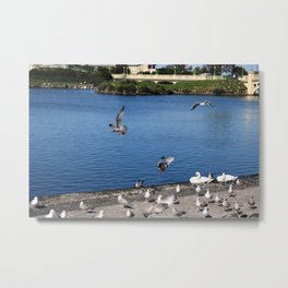 Seabirds in Flight Metal Print