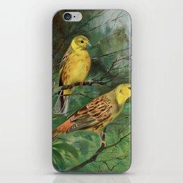 Kuhnert, Friedrich Wilhelm (1865-1926) - Wild Life of the World 1916 v.1 (Yellow Bunting) iPhone Skin