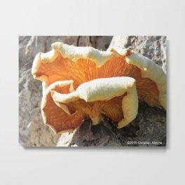 Flower or Mushroom? Metal Print