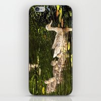 ducks iPhone & iPod Skins featuring Ducks by LudaNayvelt