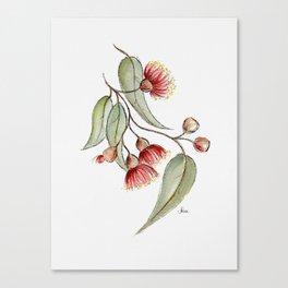 Flowering Australian Gum Canvas Print