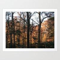 Woods at Dawn Art Print