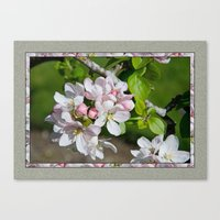will ferrell Canvas Prints featuring APPLE BLOSSOM by Alpine Seaside Landscapes