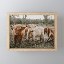 Curious Highland Cows Framed Mini Art Print