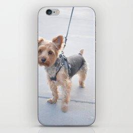 Baby Dog iPhone Skin