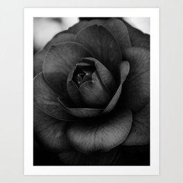 Camellia Black and White 3 Art Print