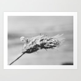 Black and White Macro Weed Art Print