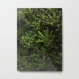 Mock Orange Plant Printable Wall Art | Floral Flower Botanical Nature Outdoors Macro Photography Print Metal Print