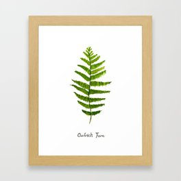 Ostrich fern Framed Art Print