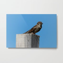 Breakfast or Lunch? Metal Print