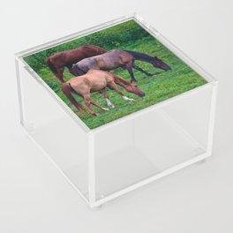 Grazing Horses Acrylic Box