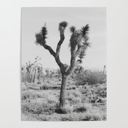 Joshua Tree in Black and White Poster