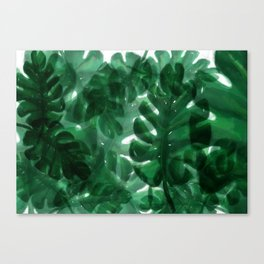 Monstera Leaves Canvas Print