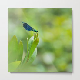 Metallic dragonfly Metal Print