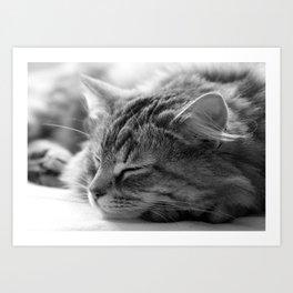 Sleeping cat, cat photography, black & white. Art Print