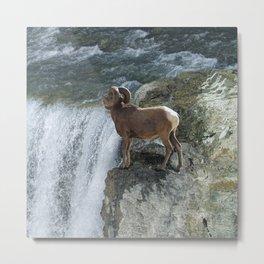 Big Horn Sheep & Rocky Mountain Waterfall Metal Print
